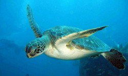 turtle-st-lucia
